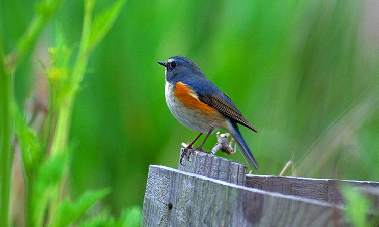 The Messenger, le silence des oiseaux