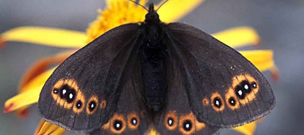 Balade entomologique et botanique : le bilan en chiffres.